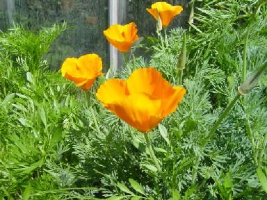 flower031