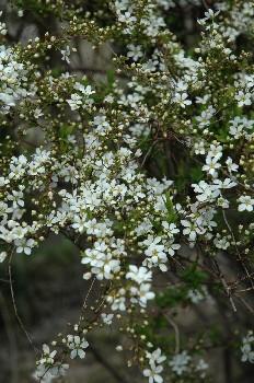 flower060