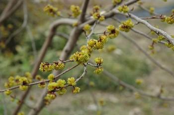 flower067