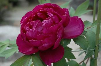 flower085