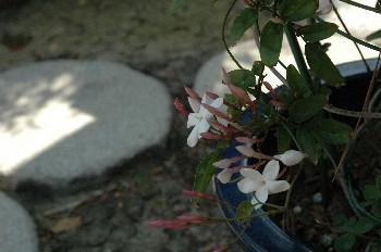 flower095