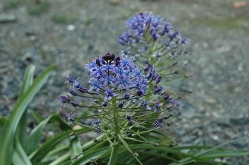 flower098