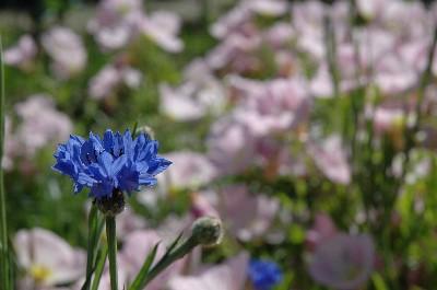 flower112