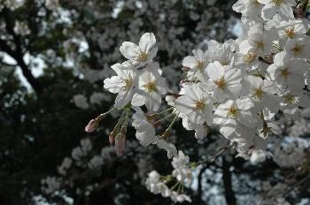 tsurumai002